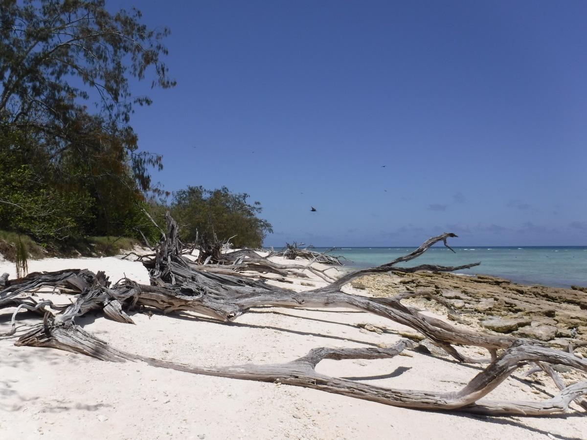 Australia - Bundaberg & Lady Musgrave Island